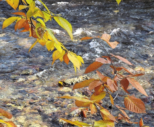 Rushing Stream with Fall Leaves by Tiina Bockrath