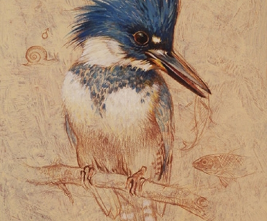 Tucker - Kingfisher