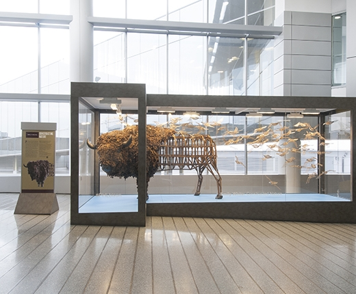 Emily White - American Bison/Paririe House and Fleet, Philadelphia Airport install (photo courtesy of John Carlano)