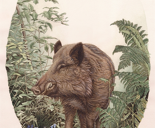 Emily White - Wild Boar with Foliage