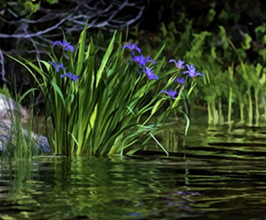Ed Williams - Water Iris